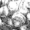 Topinambur, Tusche auf Papier - 1994-2002